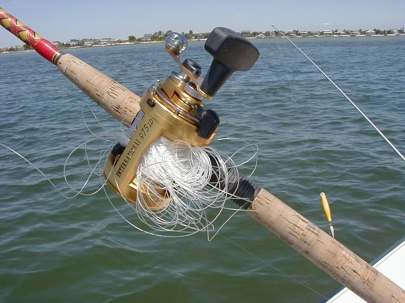 blog archives - skimmeroutdoors, Fishing Reels